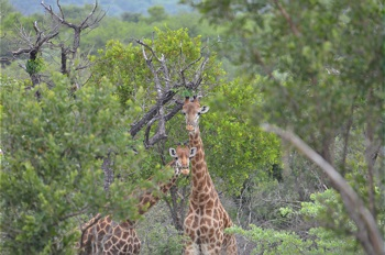 Eco-Tourism at Ilanga Lodge