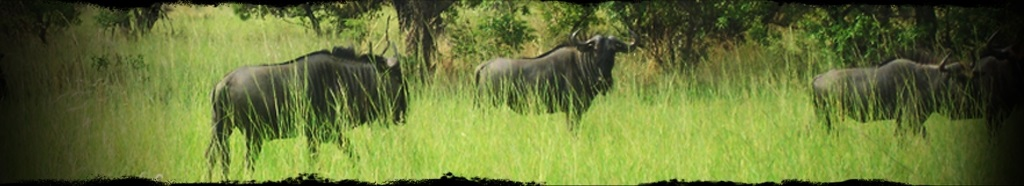 Offer request Eco Safaris - Ilanga Lodge